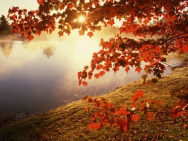 joseph-sohm-sunrise-through-autumn-leaves