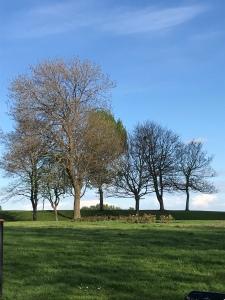 Trees East End Park Leeds